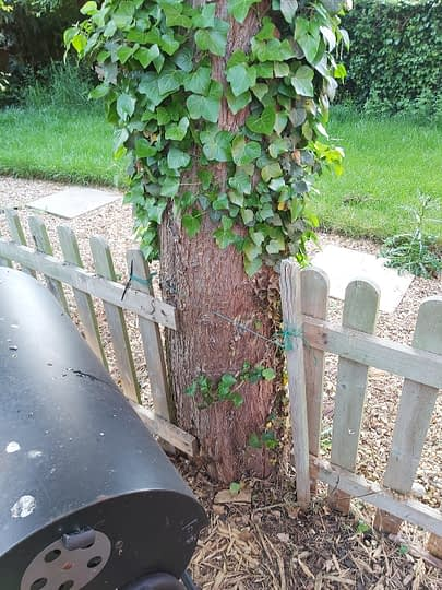 Tree Inbetween fencing